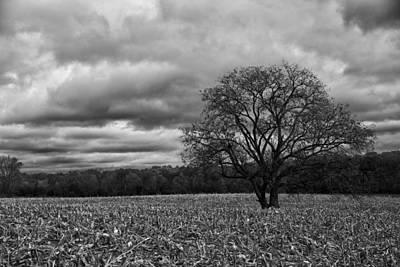 B Photograph - Autumnal Equinox Bw by Rachel Cohen