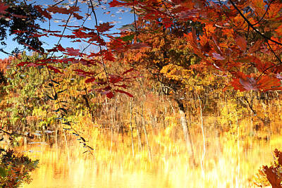 Photograph - Autumnal Fire by James Hammen