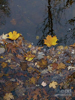 Photograph - Autumnal Flow by Tim Good