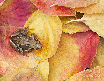 Autumnal Frog Art Print by Tim Gainey