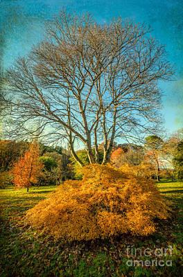 Autumn Landscape Digital Art - Autumnal Garden by Adrian Evans