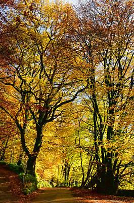 Autumnal Lane Dulverton Art Print