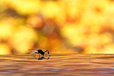 Photograph - Autumnal Light Watcher by Theo