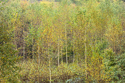 Photograph - Autumnal Pattern - Colorful Trees In Fall by Matthias Hauser