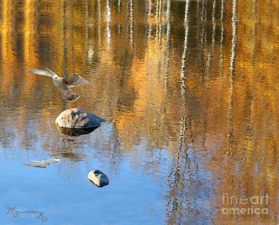 Photograph - Autumnal Reflections by Mariarosa Rockefeller