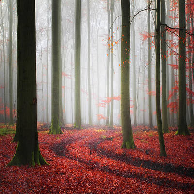 Trunks Photograph - Autumnal Tracks by Carsten Meyerdierks