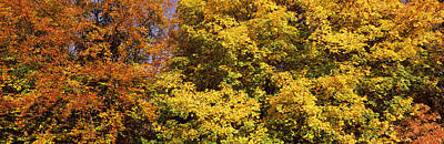 Multi Colored Photograph - Autumnal Trees In A Park, Ludwigsburg by Panoramic Images
