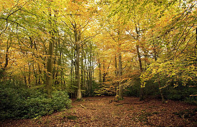 Autumnal Woodland I Art Print by Natalie Kinnear