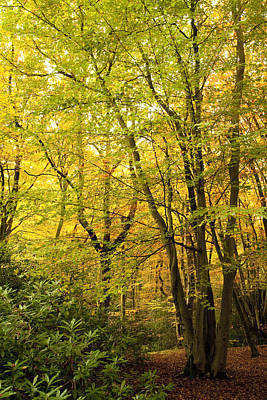 Autumn Scene Photograph - Autumnal Woodland IIi by Natalie Kinnear