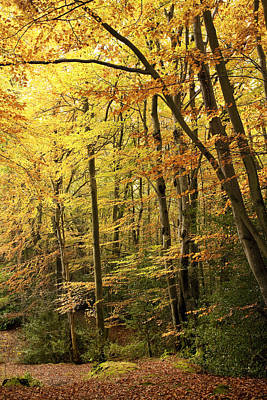 Autumn Scene Photograph - Autumnal Woodland Iv by Natalie Kinnear