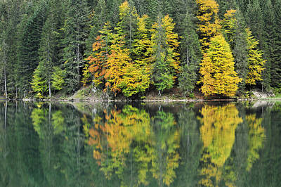 Andre Photograph - Autumn Forest Reflected In Lake Haute by Andre Gilden