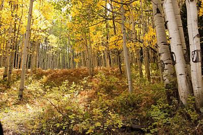 Photograph - Autumns Aspen Fern by Eric Rundle