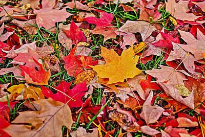 Autumn's Blanket Art Print by SCB Captures