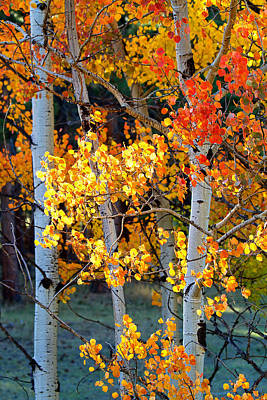 Autumn's Fire Art Print by Jim Garrison