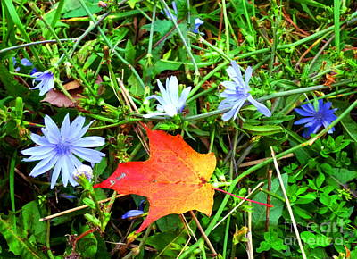Art Print featuring the photograph Autumns First Leaf by Jackie Carpenter