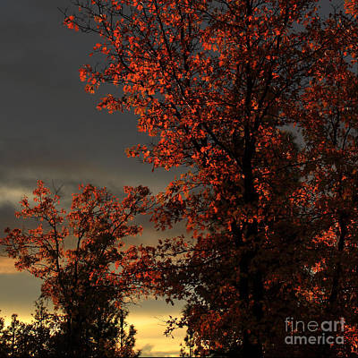 Photograph - Autumn's First Light by James Eddy