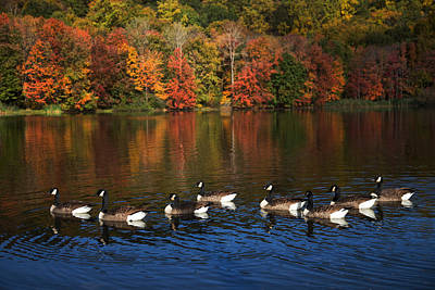 Photograph - Autumns Flock Of Eight by Karol Livote