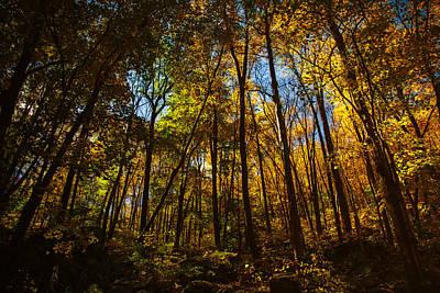 Connecticut Landscape Photograph - Autumns Forest by Karol Livote
