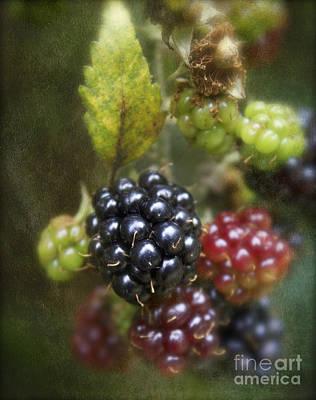 Autumn's Fruit Art Print by Michelle Orai