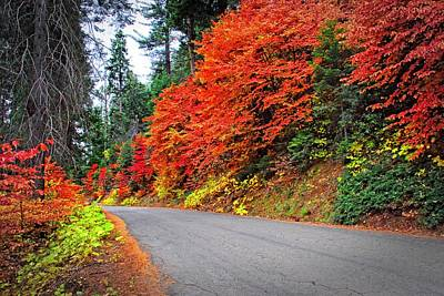 Photograph - Autumn's Glory by Lynn Bauer