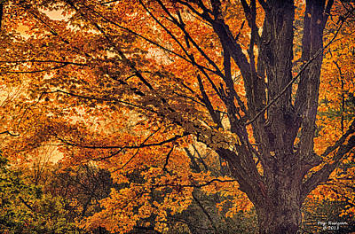 Photograph - Autumn's Glory by Peg Runyan