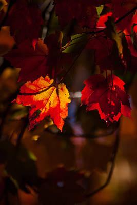 Essence Of Life Photograph - Autumns Glow by Karol Livote