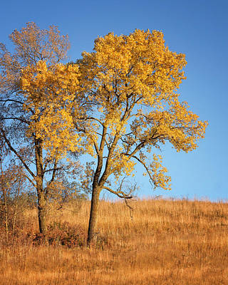 Photograph - Autumn's Gold #1 by Nikolyn McDonald