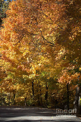 Photograph - Autumn's Gold by Michael Creamer