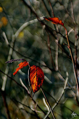 Photograph - Autumn's Last Dance by Wayne King