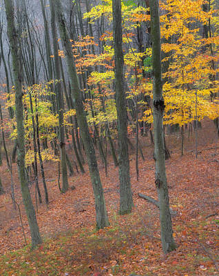 Photograph - Autumn's Last Stand Landscape by Bill Wakeley