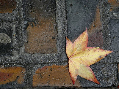 Photograph - Autumn's Leaf by Sherry Dee Flaker