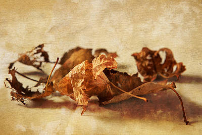 Autumn's Leavings Art Print by Caitlyn  Grasso