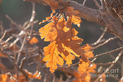 Photograph - Autumn's Light by Shawn Naranjo