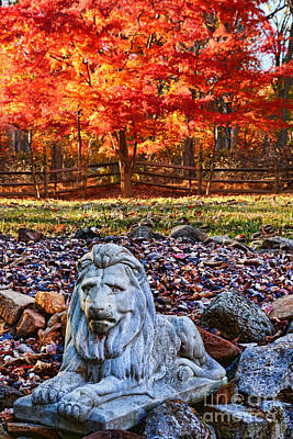 Autumn's Lion Art Print