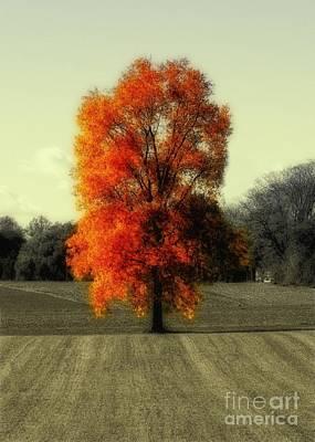 Autumn's Living Tree Art Print