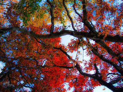 Photograph - Autumn's Looking Up by Glenn Feron
