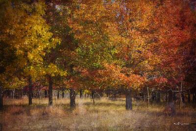 Autumn's Miracle Art Print by Jeff Swanson
