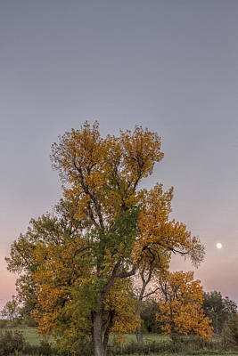 Photograph - Autumn's Moon by Scott Bean