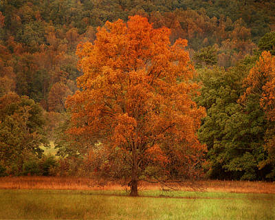 Photograph - Autumn's Paintbrush by TnBackroadsPhotos