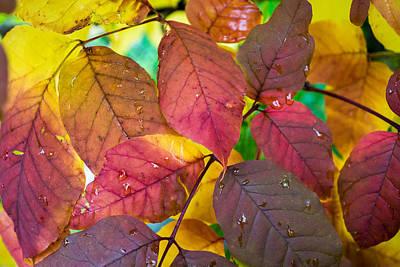 Photograph - Autumn's Palette by Bill Pevlor