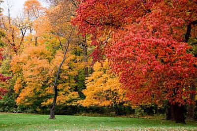 Photograph - Autumn's Palette  by Steve Stuller
