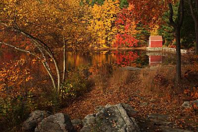 Autumns Path Art Print by Karol Livote