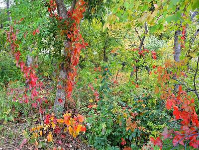 Photograph - Autumn's Rainbow Forest by Diane Alexander