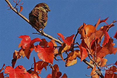 Photograph - Autumn's Sparow by Elizabeth Winter
