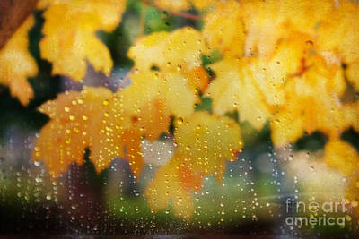 Vivid Fall Colors Photograph - Autumns Tears by Darren Fisher