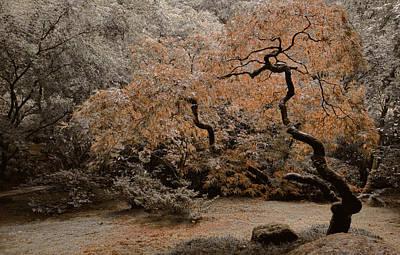 Photograph - Autumn's Touch by Don Schwartz
