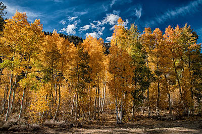 Mountain Royalty-Free and Rights-Managed Images - Autumns Variety by Cat Connor