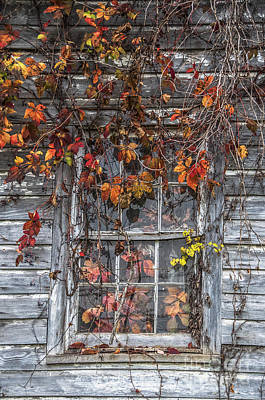 Autumn's Window Curtains Art Print