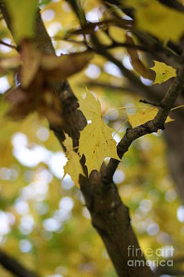 Autumn's Wondrous Colors 1 Art Print by Carol Lynch