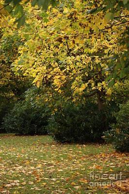 Autumn's Wondrous Colors 4 Art Print by Carol Lynch